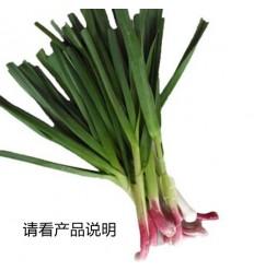 蒜苗/青蒜 Garlic Sprouts 1扎4-5条