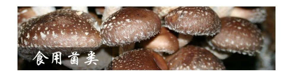 食用菌菇类